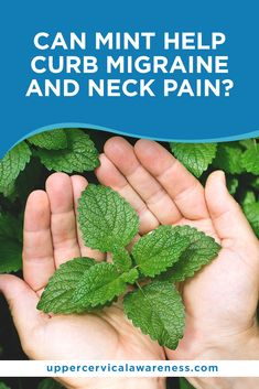 What's the basis of this claim? Can it indeed put an end to your headaches and neck pain? Let's find out the truth in our discussion on mint, migraine episodes, and upper cervical spine pain. Cervical Pain, Spine Pain, Migraine Attack, Neck Bones, Mint Oil, Neck Pain Relief, Losing A Loved One, Herbal Medicine, The Balm