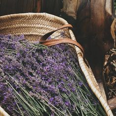Love French, Market Baskets, Medicinal Herbs, Studio Ideas, Just Amazing, Herbalism, Lavender, Characters, Nice