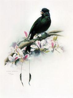 Китайский художник_ZENG Xiao Lian. Обсуждение на LiveInternet - Российский Сервис Онлайн-Дневников