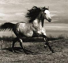 Running Horse, 1985