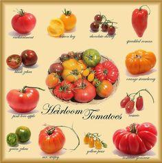 Heirloom Tomatoes...