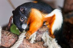 Cute and colorful squirrel