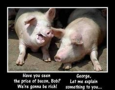 Have you seen the price of bacon Bob we're gonna be rich George let me explain something to you