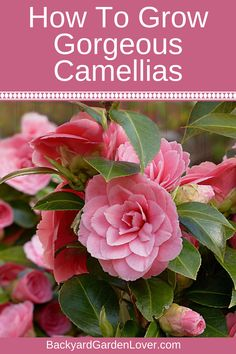 New Harmonious Colors Other Bath & Body Supplies Camellias Southern Plantation Soap Set