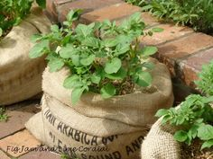 Cafe Arabica Burlap Coffee bags to grow potato