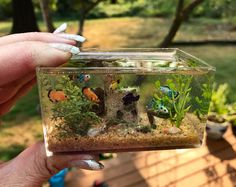 1/12th scale Freshwater Aquarium by Nina's Mini Creations (Please do not remove or alter description) Dollhouse Miniatures, Polymer Clay Miniatures, Polymer Clay Art, Freshwater Aquarium, Aquarium Fish, Diy Resin Crafts, Miniature Crafts, Clay Figurine, Ponds