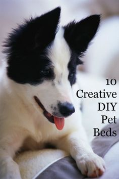 10 Creative DIY Pet BedsBlissfully Domestic