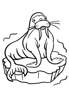 10 Funny Walrus Coloring Pages For Your Toddler