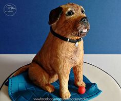 This little border terrier is Star