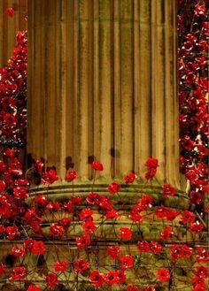 Weeping Window poppies at St Georges Hall. Image by Jayne Telford