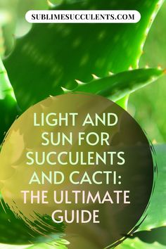 Light and sun for succulents and cacti, The Ultimate Guide. Succulents are sun-loving plants and that's good a thing – it'd be pretty hard to survive in those arid and desert environments without an appreciation for sunshine. Check this pin for a complete guide about light and sun for succulents. #succulentscacti #succulents #sun #light #cacti Succulent Planter Diy, Succulent Care, Cacti And Succulents, Cactus Plants, The More You Know, Just For You, Succulent Species, Cactus Light, Cactus Care