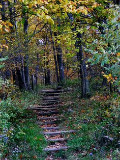 Appalachian trail.  Or, as some of us call it, the back yard where we grew up.