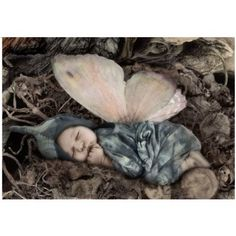 papillon more geddes papillons newborns fairies baby january fairies ...