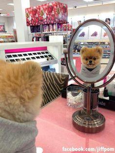Soy Boo y me encuentro súper lindo y hermoso