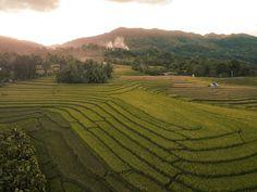 Cadapdapan Rice Terraces, Can-Umantad Falls, and Canawa Spring: A Travel Guide to Candijay, Bohol Bus Travel, Travel Tours, Time Travel, Travel Guide, Freedom Wall, Cave Pool, Beach Properties, Rice Terraces, Bohol