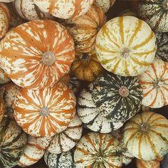 Und noch mehr Kürbisse  #kürbis #pumpkin #mamablogger