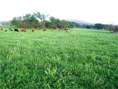 One of the questions grazing farmers often ask are, what type of forages will grow well on their farms or, which will best suit their livestock? It's probably no surprise that the simple answer is...