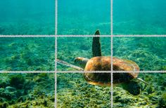 The Rule of Thirds: Another String To Your Bow | SlideBot Blog