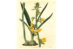 English Botanical, 1821 on OneKingsLane.com