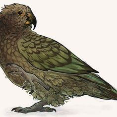 My favorite parrot and probably one of my favorite birds - giulialibard The Golden Compass, Animal Drawings, Animal Illustrations, Fantasy Setting, Wild Ones, Furry Art, Artist Art, Cool Art, Cute Animals