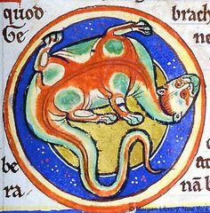 Medieval Bestiary : Lizard Gallery