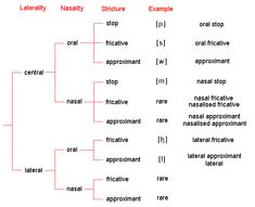 Consonants - Manner of Articulation