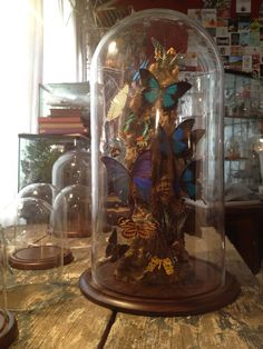 """FREE SHIPPING Taxidermy Real Butterfly Big Rare Glass Dome Gift Antique-Style Vintage-Style 23"""" high Ulysses Morpho Sunset"""
