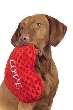 Be My Valentine will you??? Take this Love pillow and it's all set. #valentines #day