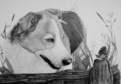 Bobbie drawing in graphite by on DeviantArt Graphite Drawings, Worlds Largest, Dogs, Artist, Painting, Facebook, Blogging, Kunst, Shop Signs