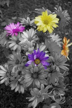33 Super ideas for wall paper flores negras wallpapers Splash Photography, Color Photography, Black And White Colour, Black And White Pictures, Color Splash Photo, Splash Of Color, Splish Splash, Color Themes, Bunt