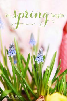 Let spring begin I Flower I Muscari I Traubenhyazinthen I Frühling I Casa di Falcone