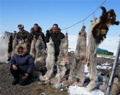 """Pictured here are hunters, their guides and prize wolves on a paid for """"Henlik Adventure."""" Today, the average hunter can sign up for a """"Wolf-hunt in the Canadian North,"""" starting in  Arviat, Nunavut. For just $5,000 one can take a week journey on snowmobiles, following the Carribou migration in hopes of killing wolves. The Nunavut region in some cases has been exploited for sport in recent years. Polar Bear Hunting, Snowmobiles, Hunters, Wolves, Spiritual, Journey, Canada, Cases, Cold"""