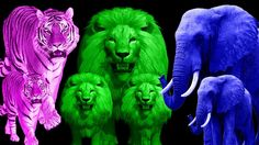 Learn Colors With Animals For Children | Finger Family Nursery Rhymes | Animals Sounds For Kids https://youtu.be/FaQndQd4rJY