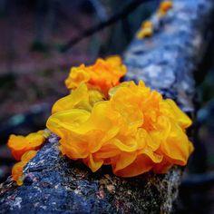 """Mushroom Ninja"" Explores the Beautiful World of Exotic Fungi on His Hikes"