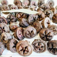 40 Natural dried large gum nuts eucalyptus globulus fruit | Etsy