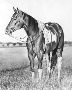 Equine Art by Maria D'Angelo - Graphite Pencil