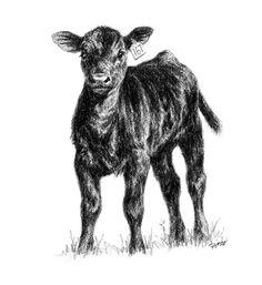 Spring - time for baby calves