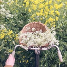 """""""I stopped by the Barrens and picked these mayflowers. Smell them, Marilla -- Drink them in."""" - Anne of Green Gables"""