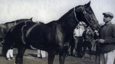 War Admiral: Man o' War's Greatest Son
