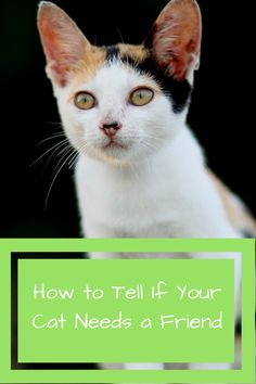 How t tell if your cat needs a friend.  http://mobikitty.com/how-to-tell-if-your-cat-needs-a-friend/