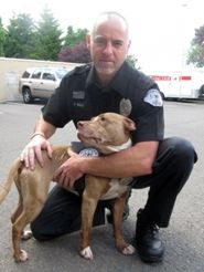 Pit Bull saved from shelter now a Police dog