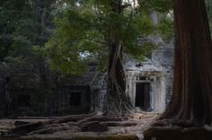 Ancient jungle temple where Harmen Graves invests his time and energy to the detriment of his health and the well being of others...