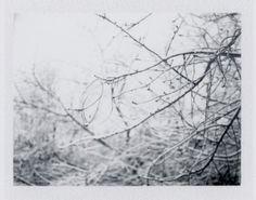 Winter © Azzari Jarrett
