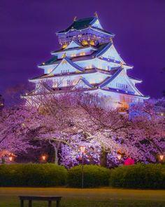 Osaka Castle, Osaka, Japan, sakura .