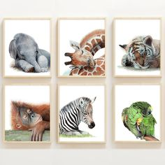 Set of 6 Watercolor Sleeping Jungle Animal Prints - Emily Olson Art - Set of 6 Watercolor Sleeping Jungle Animal Prints Complete your jungle themed nursery with this set of 6 adorable sleeping baby animal prints from Watercolor Luv! Jungle Theme Nursery, Animal Nursery, Themed Nursery, Jungle Nursery Boy, Giraffe Nursery, Nursery Prints, Sleeping Tiger, Sleeping Animals, Jungle Animals