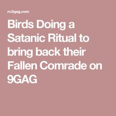 Birds Doing a Satanic Ritual to bring back their Fallen Comrade on 9GAG