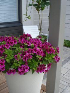 Istutusruukku - Flower pot Flower Pots, Flowers, Gardens, Plants, Flower Vases, Florals, Planters, Flower, Blossoms