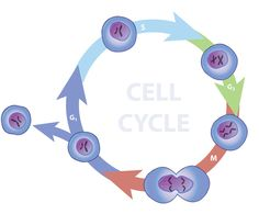 If a cell was a factory, what workers do these parts represent?
