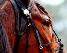 The blue taped braided forelock