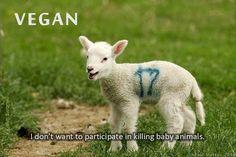 reason to be vegan